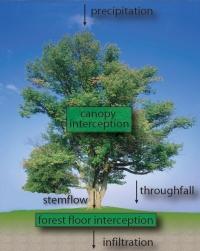 interception_types_text_small